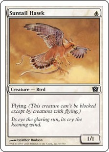 Солнечный ястреб (Suntail Hawk)