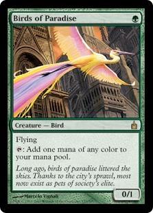 Райские птицы (Birds of Paradise)